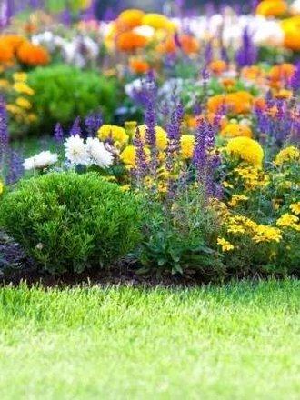 szkodniki ogród
