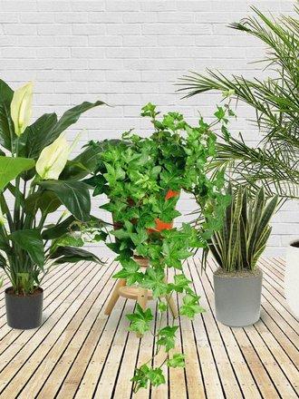 5 Roślin Które Powinnaś Umieścić W Sypialni Aby Lepiej
