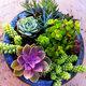ogródek miniaturowy