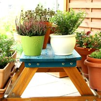 Rośliny doniczkowe są pięknym elementem dekoracyjnym pomieszczeń i ogrodów, ale także naturalnym...