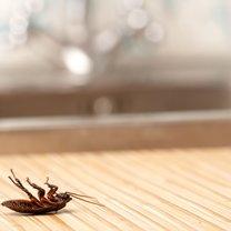 Mrówki, karaluchy, rybiki i mole często nawiedzają nasze domy niszcząc meble, ubrania i powodując...