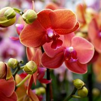 Storczyki, zwane również orchideami, uznawane są za jedne z najpiękniejszych kwiatów na świecie...