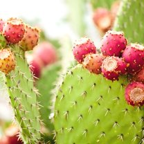 Kaktusy to wyjątkowy rodzaj kwiatów. Należą one do rodziny sukulentów, czyli roślin, które są...