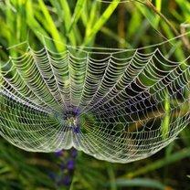 Wszędobylskie pająki potrafią nieźle uprzykrzyć nam życie i wbrew pozorom wcale nie jest prawdą...