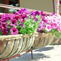 Nic tak pięknie nie ozdobi balkonu czy ogrodu w lecie, jak kwiaty. Można zasadzić je już wiosną...
