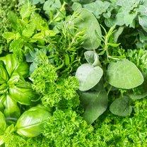 Aromatyczne zioła warto mieć zawsze pod ręką z co najmniej kilkunastu powodów. Perfekcyjnie wzbogacają...