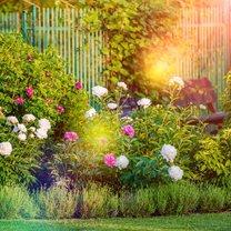 Jesień, podobnie jak wiosna, to okres porządków, również w ogrodzie. Musimy usunąć zeschnięte...