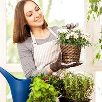 Na rynku znajdziemy wiele preparatów do pielęgnacji roślin doniczkowych, jednak niektóre z nich zawierają...