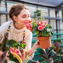 Okres niskich temperatur jest szczególnie niekorzystny dla roślin doniczkowych, które ozdabiają nasze...