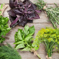 Przyprawy cenimy głównie za smak i aromat, jaki nadają potrawom. Ich odpowiedni dobór często jest...