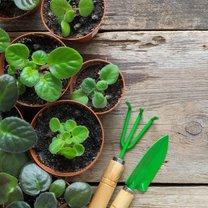 Wiosna to idealny moment na przesadzanie roślin doniczkowych. Po zimowym zastoju budzą się do życia...