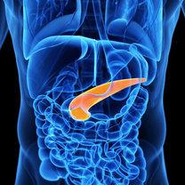 Trzustka jest jednym z najważniejszych organów w organizmie człowieka. Niewłaściwie nawyki mogą...