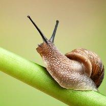 Kiełkujące młode rośliny mogą być pożywką dla wielu ogrodowych szkodników. Aby cieszyć się...