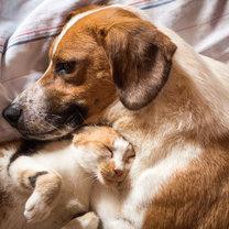 Utrwalił się stereotyp, że pies i kot pod jednym dachem to istna mieszanka wybuchowa. Od razu wyobrażamy...