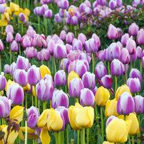 Każdy, kto chce mieć piękne kwiaty w ogrodzie, musi zacząć planować ich sadzenie z dużym wyprzedzeniem...