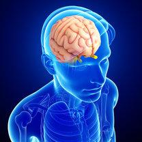 Szyszynka to malutki gruczoł dokrewny znajdujący się w mózgu. Mimo niewielkich rozmiarów pełni w...