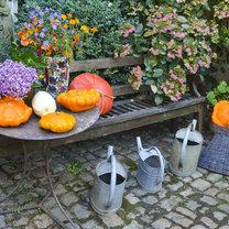 Jesienią przydomowe ogrody nieco zamierają – kwiaty nie są tak obfite, a niższe temperatury i brak...