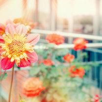 Przed nadejściem zimy musimy uporządkować nasz balkon i taras. Jeśli wiosną i latem były ozdobione...