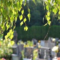Przed dniem Wszystkich Świętych na cmentarzach obserwuje się większy ruch niż zwykle. Aby godnie...