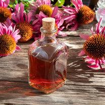 Echinacea (jeżówka) od wieków była wykorzystywana przez medycynę naturalną. Przygotowywane z niej...