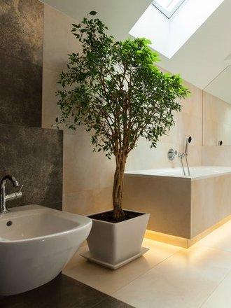Najpiękniejsze Rośliny Do łazienki Porada Tipypl