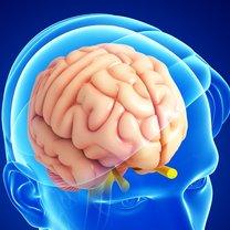 Układ nerwowy kontroluje wszystkie procesy i funkcje zachodzące w naszym organizmie. Od jego sprawnego...