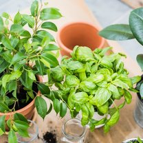 Rośliny koją zmysły, pomagają się zrelaksować, doskonale oczyszczają powietrze i - rzecz jasna...