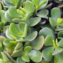 Sprowadzanie roślin wyłącznie do atrakcyjnego dodatku do mieszkania czy domu to krzywdząca generalizacja...