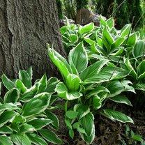Wiele uwagi poświęca się ogrodom, które są nasłonecznione. Poradniki dają wskazówki, jakie gatunki...