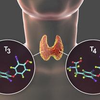 Jod to jeden z pierwiastków śladowych, który jest niezbędny do prawidłowego funkcjonowania organizmu...