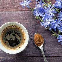 Kawa z cykorii nie powinna być tak naprawdę określana mianem zarezerwowanym dla napoju z ziaren kawowca...