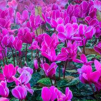 Zimą większość roślin w ogrodzie przechodzi w stan hibernacji, robi się mniej kolorowo, a dni stają...