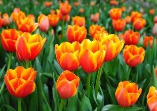Rośliny, Kwiaty i Zioła